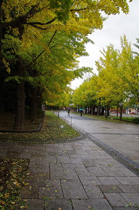 秋色への誘い