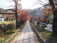 京都の秋 №3