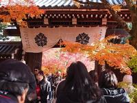京都の秋   NO1