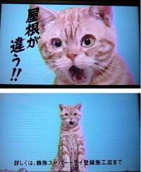 「顔が、もどらーん」猫