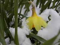 連休最終日は雪