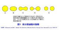 日本(36)-旧帝国陸海軍の核兵器開発(8)