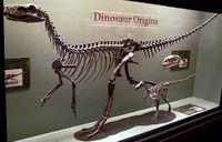 中生代(6)−三畳紀(2)−ヘレラサウルス