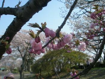 秩父の花 2010春