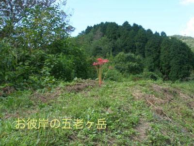 お彼岸の五老ケ岳 '08,9