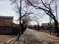 桜はもうすぐ!&美味しいソフト☆