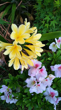 花 無事に咲く