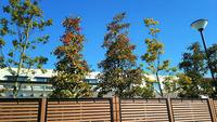 保育園の木