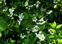 初夏を思わせる花
