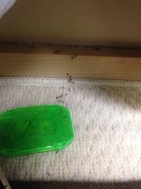 アリの巣コロリの実写