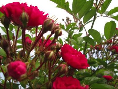 夏の花が咲きだした