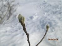 春・・・なのかな