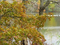 ポロ湖紅葉からカマツカ