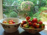 家庭菜園 苺