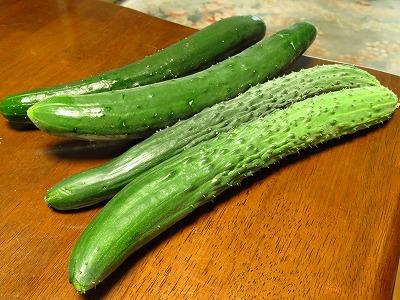 家庭菜園 収穫時