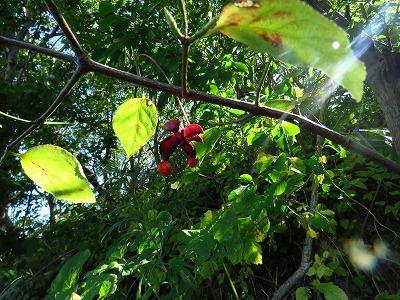 赤い実 8種