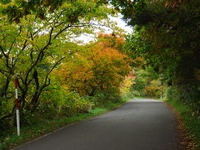 私の散歩道より紅葉