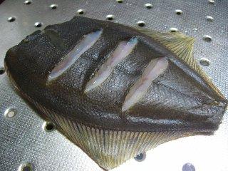 魚 マガレイ