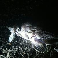 11月4日の釣り