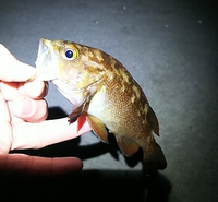 新虻田漁港からの小樽南防波堤