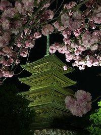 東寺 夜桜ライトアップに行ってきたよ