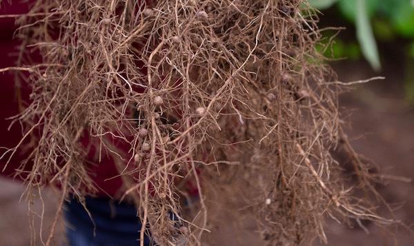 採れたての枝豆で作る 贅沢なずんだ餅! くるるの杜