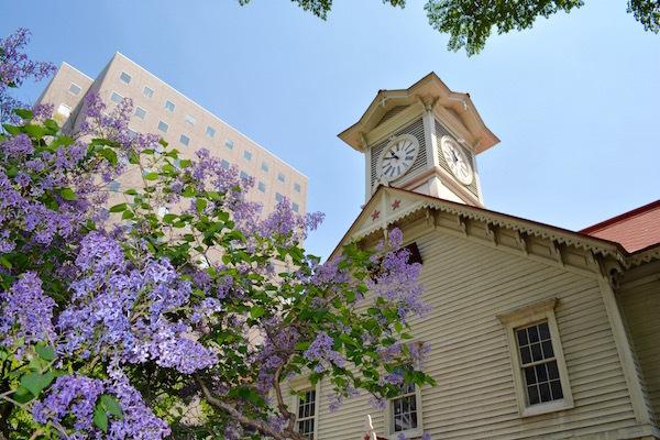 札幌の木「ライラック」祭りで楽しむ 春の休日