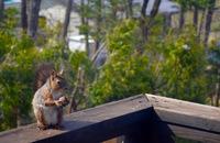 アイヌの偉大な酋長「クーチンコロ」 旭川市 北方野草園