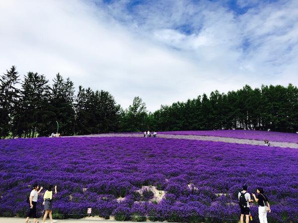 深紫のラベンダー 全力で感じる中富良野町