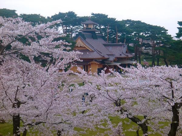 桜が咲き乱れる北海道 酔いながら桜を思う