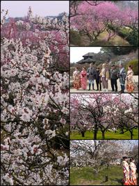 梅の花が 香る早春の関東にて