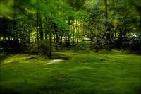しっとりと薫る 深い緑のなかで