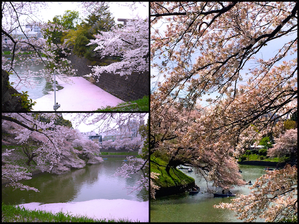 桜舞う 東京の名所めぐりと「とうちゃん」の春