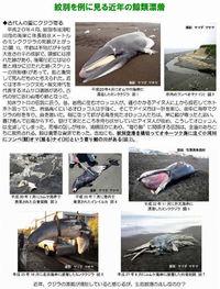 寄鯨伝説と近年の漂着例