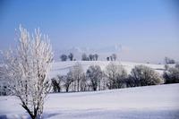 北方ジャーナル3月号の誌面から 北海道フォトエッセイ「厳冬の美瑛の丘── 満開の樹氷は、 光り輝く宝石の花」