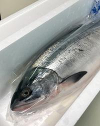 赤潮被害に襲われた北海道でオホーツクから届いた秋鮭