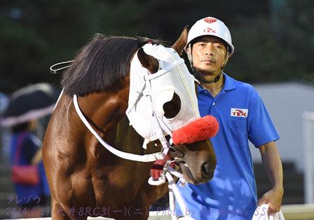 高岩孝敏厩舎 300勝 タレゾウ そしてイラッシャイマセ