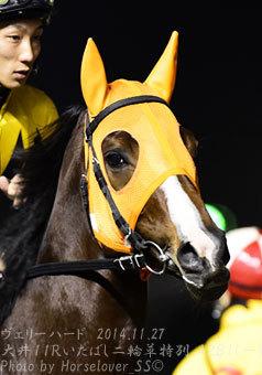 アントニオピサと唯一馬券に絡んだ8歳馬ヴェリーハード