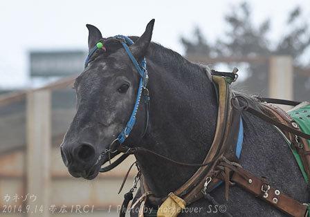 赤塚健仁騎手とカネゾウ(カネタマル産駒)