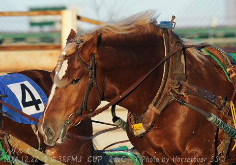 表情豊かな ツガルオーシャンと島津新騎手