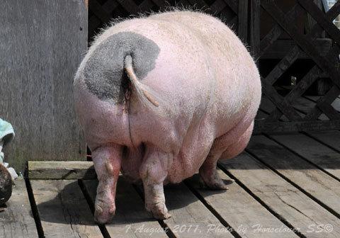 映画 銀の匙 見たよ 豚、牛、輓馬