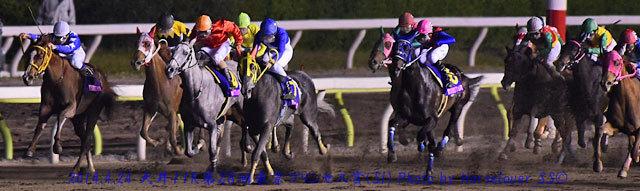 第28回 東京プリンセス賞 (SI) レース写真