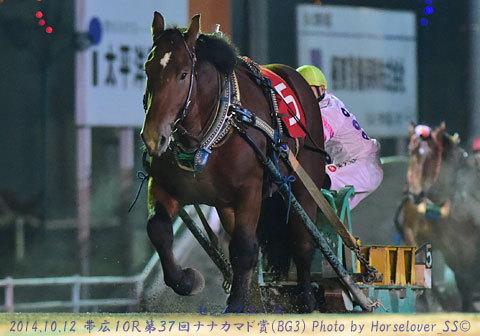 第37回 ナナカマド賞 (BG3) センゴクエース