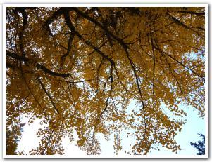 朝日が登り始めた晩秋の「五稜郭公園」