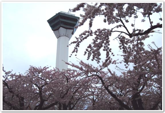 五稜郭タワーから望む桜