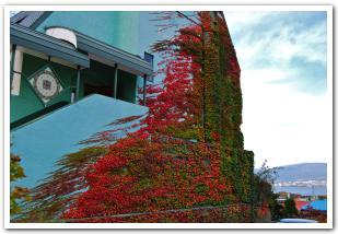 幸せ(ハート)を求めて 秋の函館元町散策
