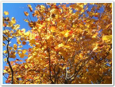 紅葉の「滝野すずらん公園」に行ってみた
