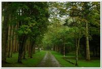 深い緑に囲まれたキャンプ場 「厚沢部町 レクの森」