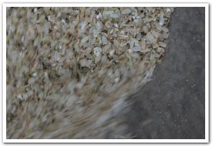 田植え〜脱穀まで 口にする新米の旨さ!