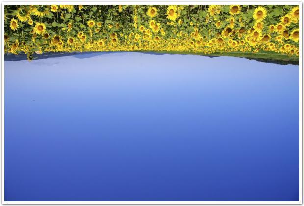 「太陽がいっぱい!」真夏の北竜町の青い空